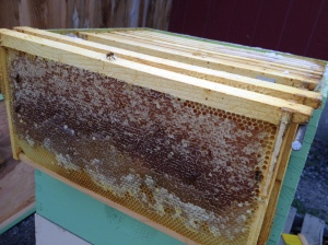 Most of the frames in the upper super had capped honey left over from last winter. It also has a lot of what looks like new honey.